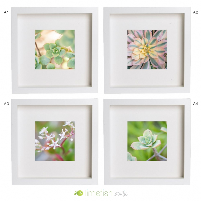 Limefish Studio 5x5 Fine Art Photo Prints | Succulents | Nature | Gifts | limefishshop on etsy
